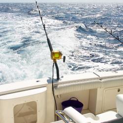 pescaaltura